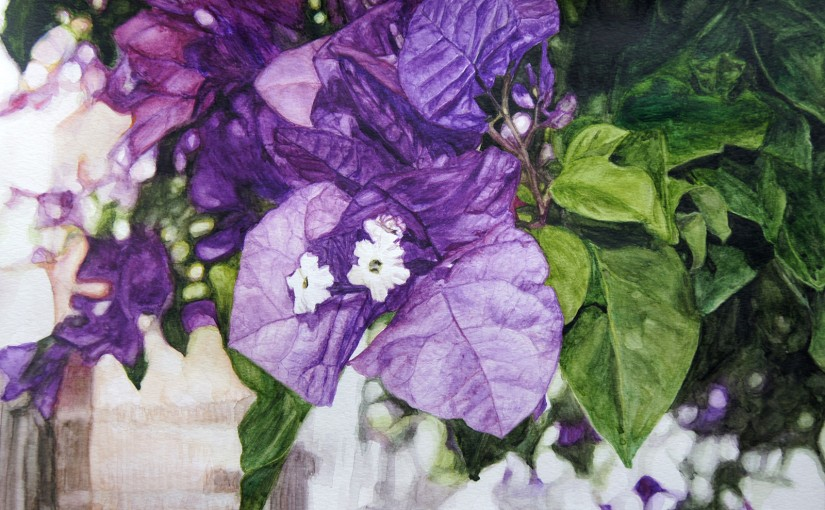 Bougainvillea Watercolour